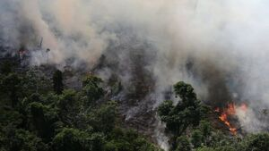 آتش سوزی در جنگل های آمازون در برزیل
