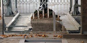 خزان درختان پایتخت در پایان مرداد +عکس