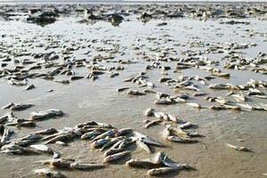فیلم/ مرگ دردناک ماهیها در تالاب هامون