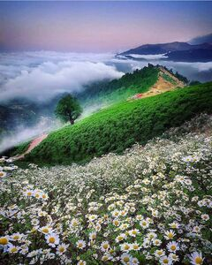 عکس/ تکهای از بهشت در گیلان