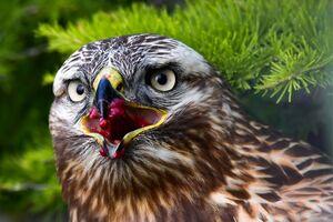 تصویر دیدنی از عقاب
