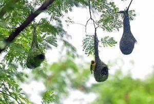 عکس/ لانهسازی زیبای پرندگان