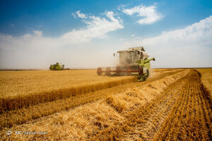 چرا از تولید ۱۰۰ میلیون تن محصول کشاورزی محروم شدیم؟