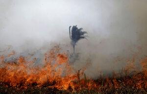 آتشسوزی 20 روزه در جنگل آمازون