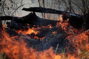 تصاویر هوایی از آتشسوزی در جنگلهای آمازون
