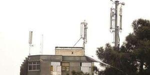 قارچهای سمی در پشت بامهای پایتخت