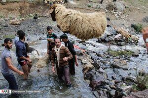 عکس/ شستوشوی گوسفندان در مناطق کوهستانی