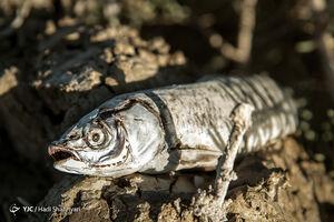 فیلم/ خورشتی با ماهی زنده