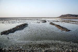 وقوع جنایت محیط زیستی در تالاب هامون+عکس