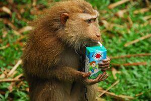 فیلم/ وقتی میمونها به کالج میروند!