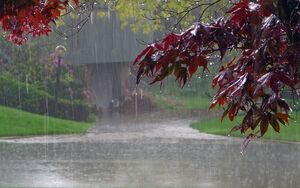 تداوم بارش باران در شمال کشور تا پایان هفته