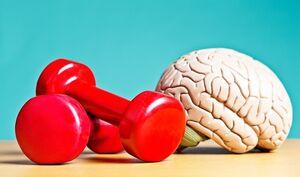 ورزشی که مغز را جوان نگه میدارد