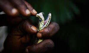 عکس/ تهدید مارهای سمی در کنگو