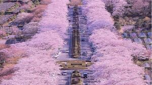عکس/ زیباترین خیابان ژاپن