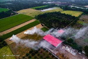 عکس/ آتش به جان زمین کشاورزان