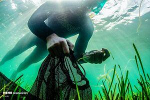 عکس/ جمع آوری بذر گیاهان دریایی