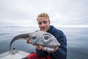 عکس/ صید عجیبترین ماهی