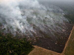 تصاویر جدید از آتشسوزی جنگلهای آمازون
