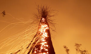 تصویری متفاوت از نفوذ آتش در تنه درختی در آمازون
