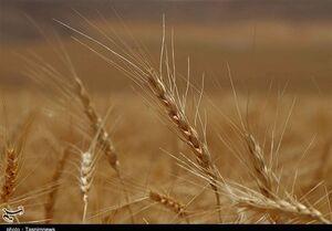 نرخ خرید تضمینی ۲۵ قلم محصول کشاورزی +جدول