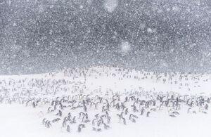 مهمانی پنگوئنها