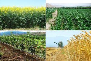 سه چالش بخش کشاورزی در سال ۹۸