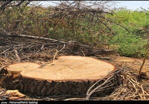 کمترین و بیشترین نرخ عوارض قطع درختان در تهران +جدول