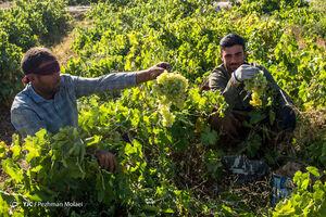 عکس/ حال و هوای این روزهای تاکستان