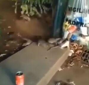 موشهای تهران در پاریس چه میکنند؟! +فیلم