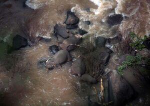 عکس/ مرگ شش فیل بر اثر سقوط از یک آبشار