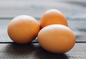 هر ایرانی سالانه چند عدد تخم مرغ میخورد؟