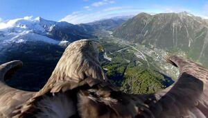 رشته کوه آلپ از چشمهای یک عقاب