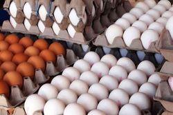 تخممرغ رسماً ۱۵ درصد گران شد