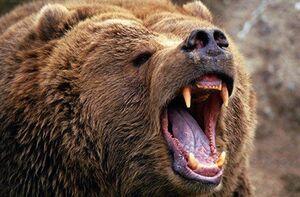 فیلم/ حمله خرس به یک مرد در خیابان!