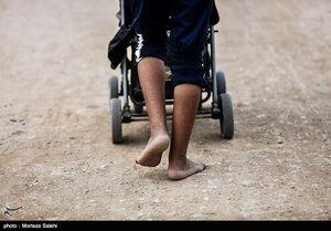 عکس/ پیاده روی اربعین از  «طریق العلماء»