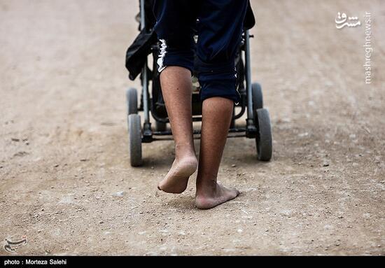 عکس/ پیاده روی اربعین از  طریق العلماء