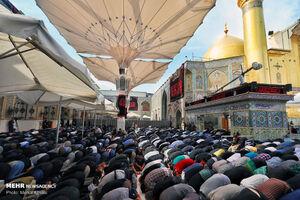 عکس/ اقامه نماز جماعت در حرم امام علی (ع)