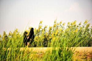 مادرانه تا حسین (ع) +عکس