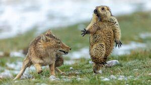 تصاویر برگزیده حیات وحش در سال