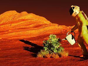 کاشت گوجه فرنگی و لوبیا روی خاک ماه و مریخ!
