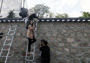 عکس/ بالا رفتن دانشجویان از دیوار اقامتگاه سفیر آمریکا