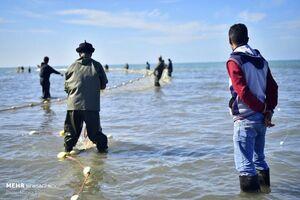 فیلم/ آلودگی ۹۰ درصد آبزیان ترکیه به مواد میکروپلاستیک