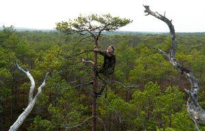 عکس/ تبحر مرد ۷۲ ساله در بالا رفتن از درخت!