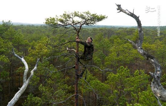 عکس/ تبحر مرد 72 ساله در بالا رفتن از درخت!