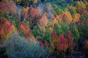 تصاویر زیبا از فرا رسیدن فصل پاییز در نقاط مختلف جهان