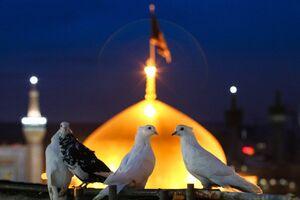 فیلم/ پیوند ملت ایران و عراق فراتر از مرزها و زبان