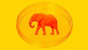 گوشت زرافه و فیل در آزمایشگاه تولید می شود