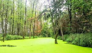 تبدیل جنگلی زیبا به زباله دونی! +عکس