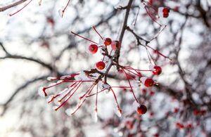 پهن شدن بساط زمستان در روسیه