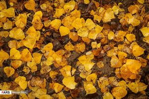 عکس/ پادشاه فصلها، پاییز!
